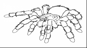 Small Picture Astounding spider web coloring pages for kids with spider coloring