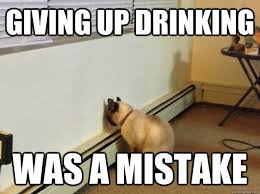 giving up drinking was a mistake - Regretful Cat - quickmeme via Relatably.com