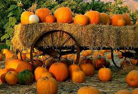 Image result for pumpkin images