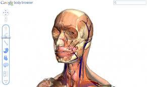 Risultati immagini per ανατομια σωματος