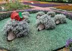 Фото цветников на даче своими руками