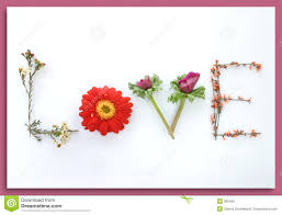 Image result for love flowers pictures