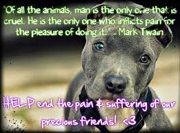 Animal Abuse Quotes Inspirational. QuotesGram