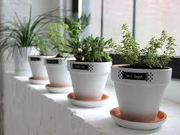 herb garden ideas window sill garden