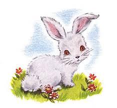 Αποτέλεσμα εικόνας για rabbit