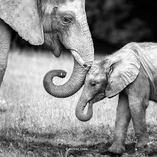 1000+ ideas about Animal Photography on Pinterest | Animales ...