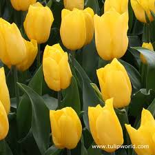 في روحك  وردة لمن   ترسل عطرها  / إهداء  لمن تحب بلغة الورد - صفحة 2 Images?q=tbn:ANd9GcRPU8IJOD_A6UY_uNvZgB7hTt1JtGpq6vMoGXNc3GjkYXVIsTahjg