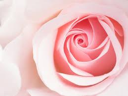 「 ピンク 光 フリー素材」の画像検索結果