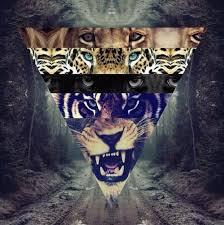 """Résultat de recherche d'images pour """"fond d'écran swagg tigre"""""""
