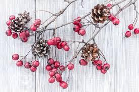 Ветки с ягодами и <b>шишки</b>