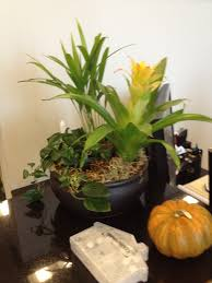 Indoor Office Greenery And Decoration