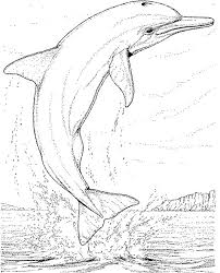 Small Picture Dolphin coloring pages coloring 4 Pinterest Wood burning