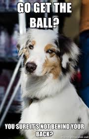 I found a spiffy dog image. My attempt at a new meme. Sassy Dog ... via Relatably.com