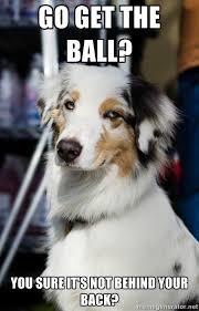 I found a spiffy dog image. My attempt at a new meme. Sassy Dog ... via Relatably.com