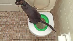 Приучите и вы свою кошку к унитазу! <b>Litter Kwitter</b> в России ...