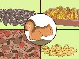 5 Ways to Make a <b>Squirrel</b> Feeder - wikiHow
