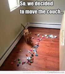 FunnyMemes.com • Cat memes - [We decided to move the couch] via Relatably.com