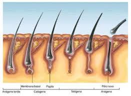 Resultado de imagem para foliculo capilar obstruido