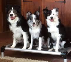Aluminum <b>Dog Bed</b> | Kuranda <b>Dog Beds</b>®