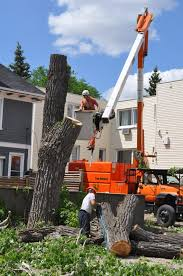http://treeloppingsunshinecoast.com