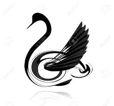 abstract vector black swan isolated on white background royalty abstract vector black swan isolated on white background stock vector 14172573