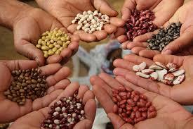 seeds க்கான பட முடிவு