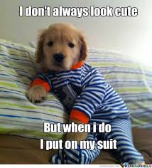 funny things - Google Search | We Heart It | cute, dog, and puppy via Relatably.com