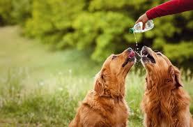 Πότε ο σκύλος χρειάζεται επιπλέον νερό;