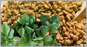 Fenugreek plant and seeds