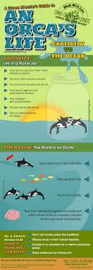provocative captive orca statistics com orcas in captivity