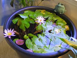 diy patio pond: attached images attachment attached images