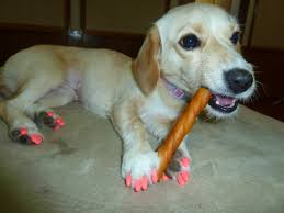 Image result for dogs nails