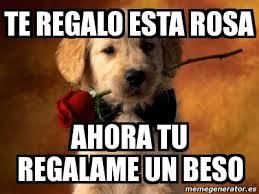 Una Rosa para cada Mujer Images?q=tbn:ANd9GcRS4LlYvRiakqEYAVkqkq5mkUhPeq54K01iVytSmANTwMi_XnITNQ
