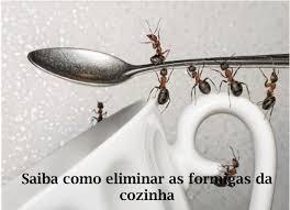 Eliminar formigas da cozinha http://www.cantinhojutavares.com