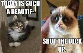 Such A Beautiful Day - Grumpy Cat Meme - See Funny Images & Photos ... via Relatably.com