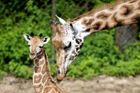 Image result for many zoos in the New Jersey area