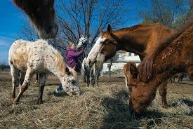 As battle over <b>horse</b> slaughter heats up, a <b>mother</b>-daughter team in ...