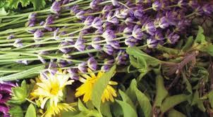 Αποτέλεσμα εικόνας για εικονες αρωματικων φυτων