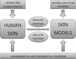 Materials used to <b>simulate</b> physical properties of human skin