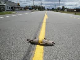Image result for roadkill