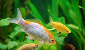 Resultado de imagen de pez en el agua