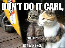 "Don't do it Carl, ""Catnip"" Not even once. - Restraining Cat ... via Relatably.com"