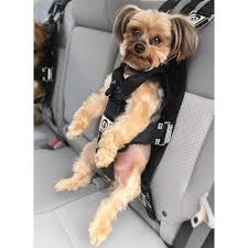 The Rocketeer Pack - Multifunctional Harness | zugopet