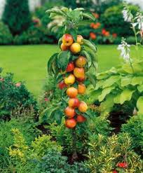 Image result for fruit plants