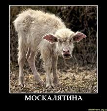 Лавров заявил, что для решения конфликта на Донбассе нужны прямые переговоры Киева с боевиками: Альтернативы нет - Цензор.НЕТ 9696