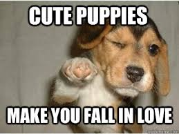 Puppy Love memes | quickmeme via Relatably.com