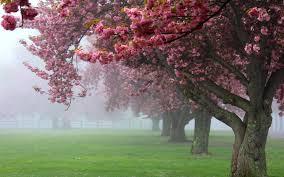 """Képtalálat a következőre: """"spring landscape, blossoms"""""""