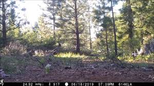 <b>Three</b> gray <b>wolf</b> pups were born <b>in the</b> north state | The Sacramento ...