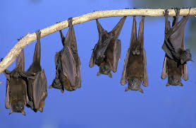 Image result for bats