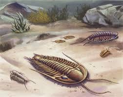 Картинки по запросу фото подводный микроорганизм